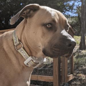 100lb dog gps tracker